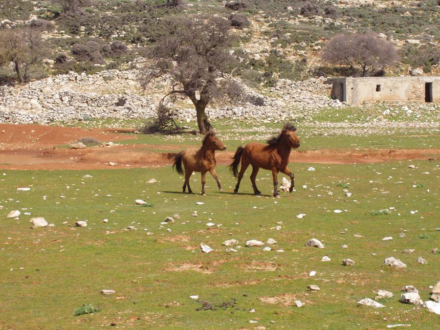 Το σκυριανό άλογο